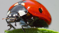close up of a ladybug