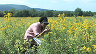 Researcher in field of goldenrod