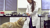 One Medicine: Treating Lymphoma in Humans and Dogs