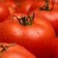 Tomato genome gets fully sequenced -- paves way to healthier fruits, veggies
