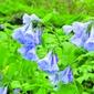 Poetry Blooms in Mundy Wildflower Garden