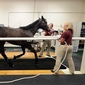 Newsday features Cornell Ruffian Equine Specialists
