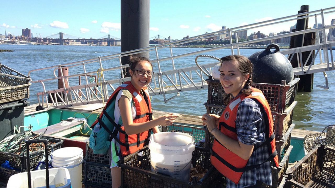 Cornell students Jennifer Zhu and Gavriela Carver prepare an oyster restoration experiment on Governor Island