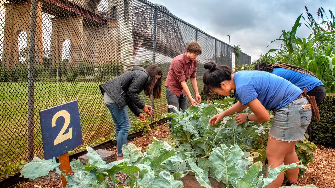 Cornell Cooperative Extension urban agriculture specialists.