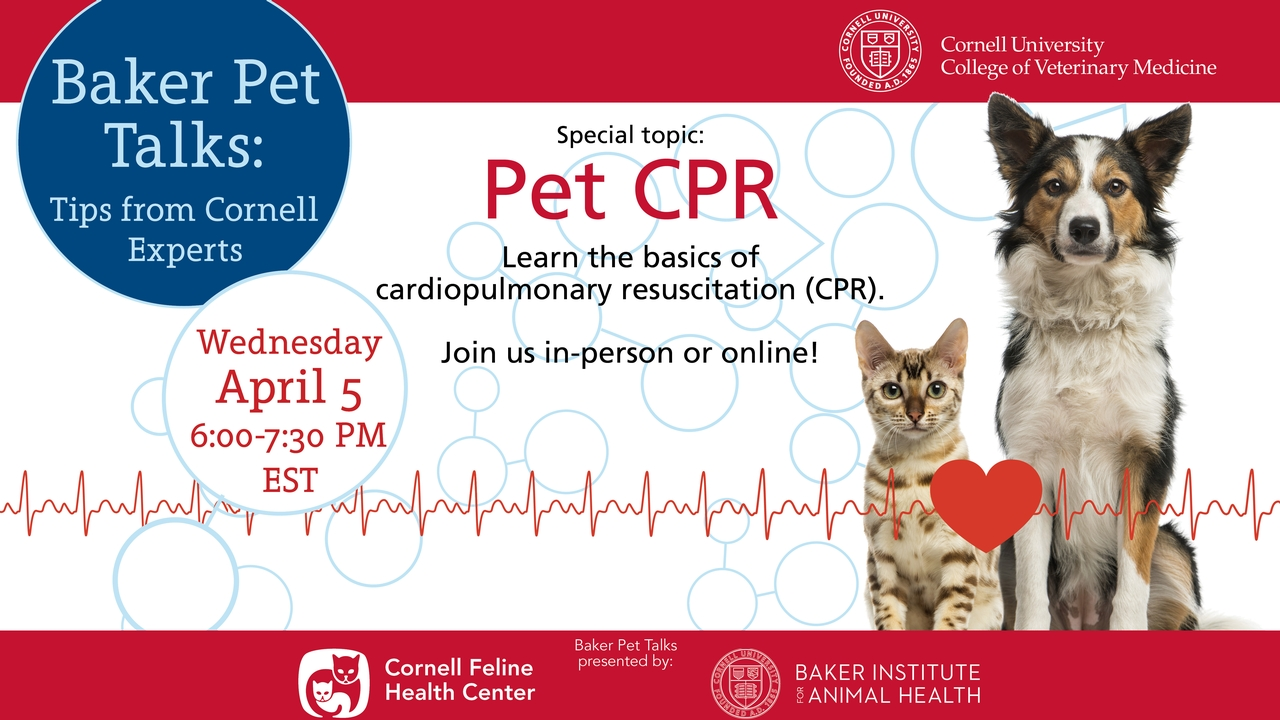 Baker Pet Talks Webinar Pet Cpr Cornellcast