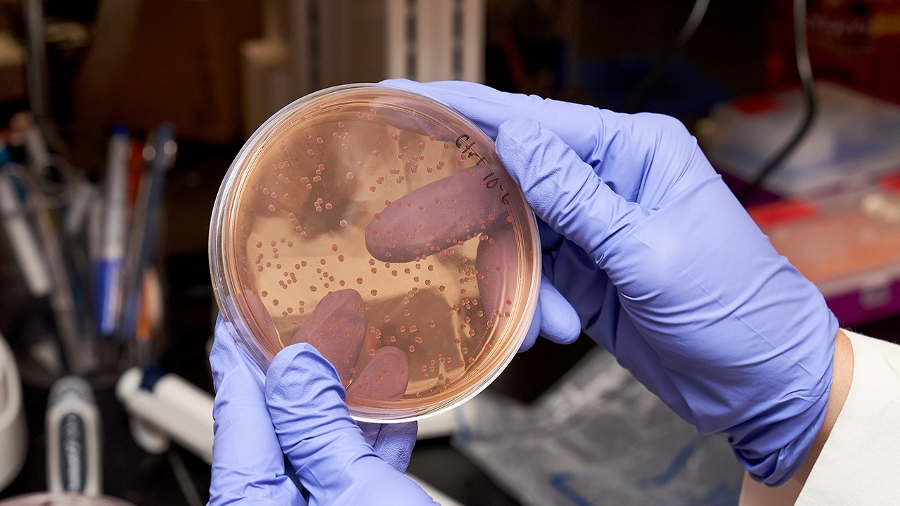 gloved hand holding up a petri dish