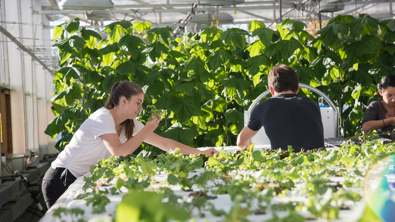 Indoor Farming Cornell Students Prepare To Become Leaders In Controlled Environment Agriculture