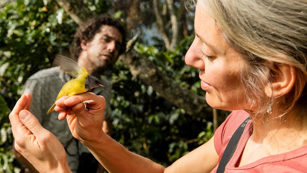 Amanda Rodewald holds a Mourning Warbler.