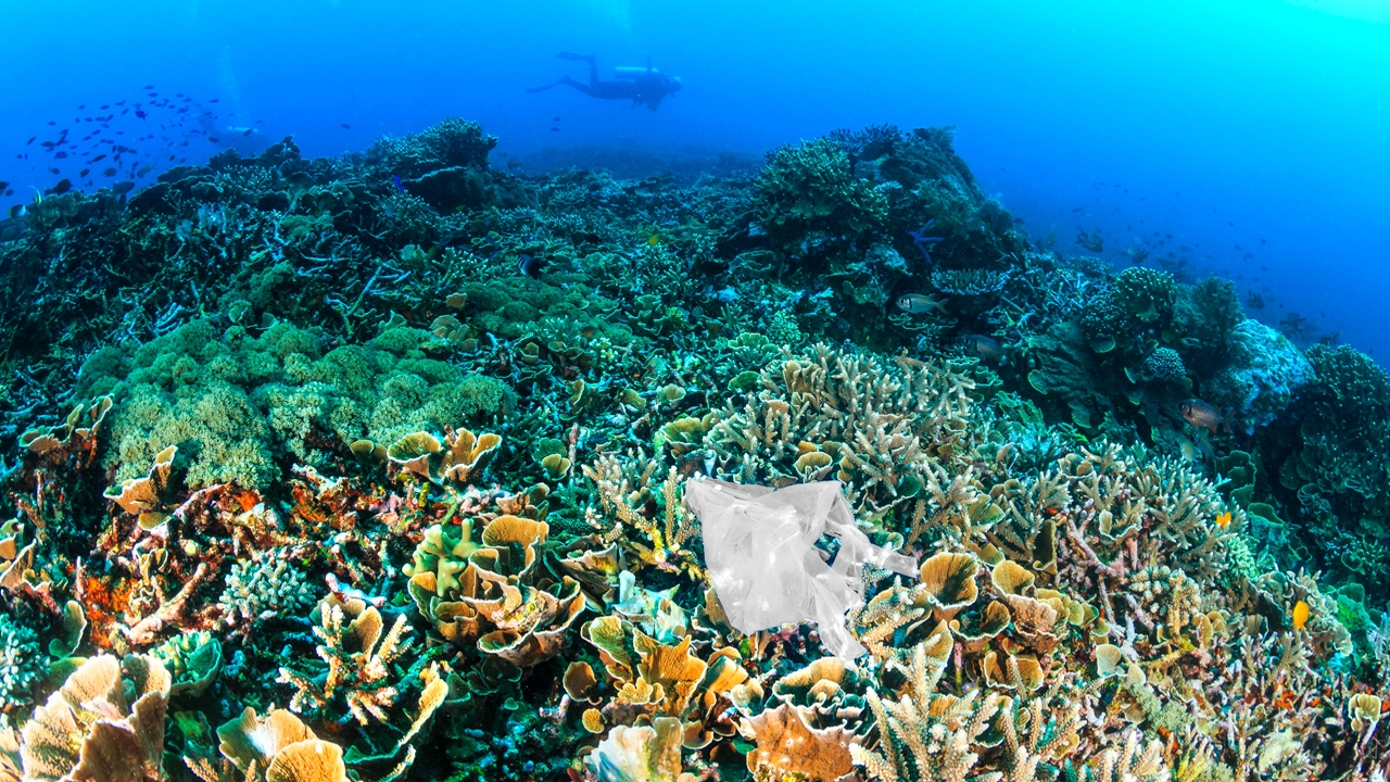Scuba diver swims near a coral reef on which a piece of plastic lies