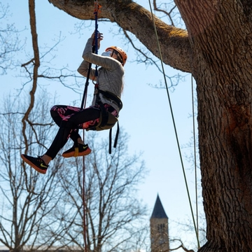 A student climbs a tree on the Arts Quad during Big Red Pride Days