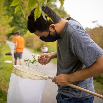 A Cornell student takes a class field trip to collect insects
