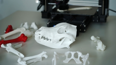 3-D models of animal bones