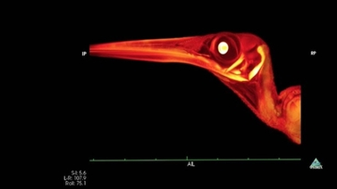 CT scan of a bird