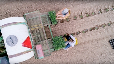 looking down on a tractor as a field is planted