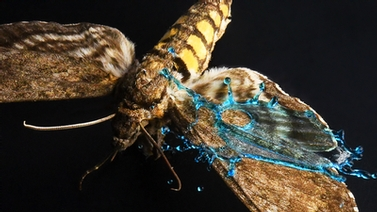 close-up on wings of an insect