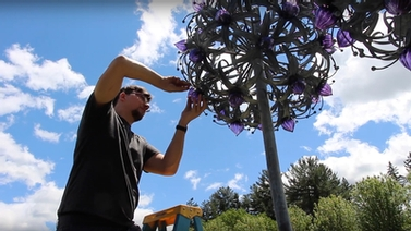 Double Allium sculpture is installed
