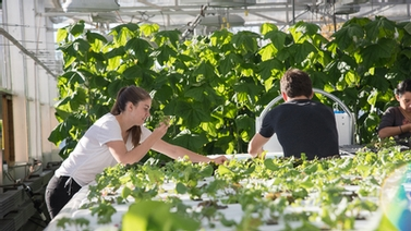 students work in a greenhouse