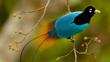 close up of Bird-of-Paradise