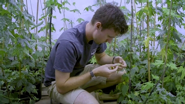 AgriTech researcher inspects a leaf