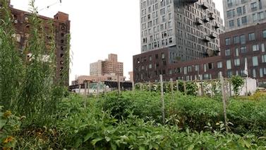 A lush urban garden.