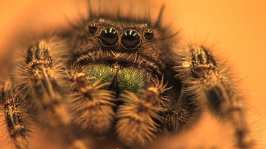 Close-up of spider face