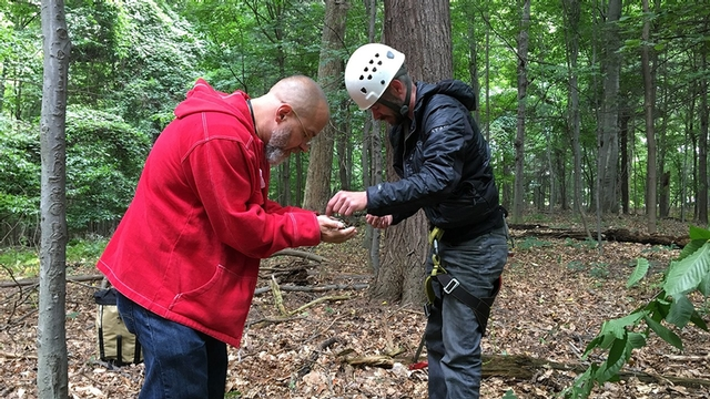 Scott LaGreca, left, curator of the Plant Pathology Herbarium, examines lichens retrieved from upper tree limbs by Nathaniel Farrington of Cornell Outdoor Education