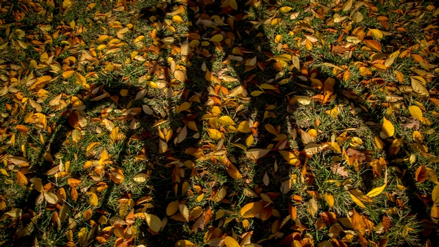 A student with a bicycle, silhouetted against a blanket of fallen leaves