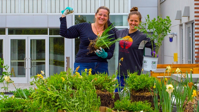 Denise Green and Kimberly Phoenix work in the natural dye garden behind the Human Ecology Building